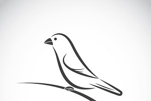 Vector of ricebird. Bird Icon.