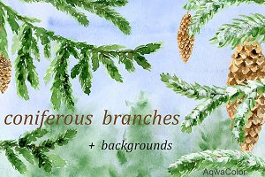 Conifer Branches Watercolor clipart