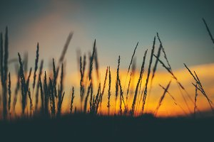 sunset grass