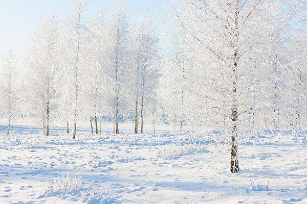 Winter for Christmas