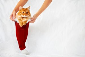 Ginger cute cat in christmas hat