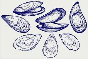 Seafood, shellfish