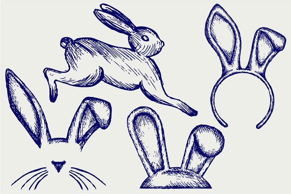 Mammal animal, hare