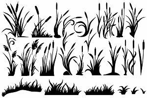 Bog plants reeds