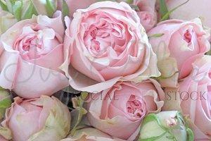 Rocking Rose - Pink Roses