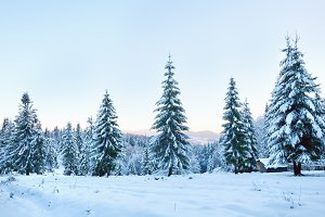 Winter snow covered forest