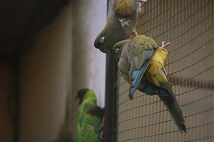 Four very serious parrots on wall