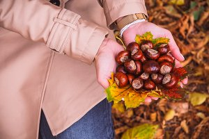 Woman with chestnuts in hands above