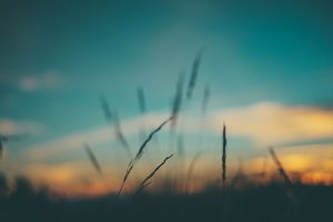 sunset and bokeh grass
