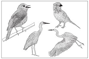 Graphic birds