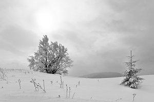 Winter Carpathian mountain