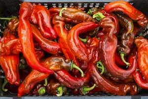 Red italian peppers