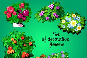 Decorative flowering plants
