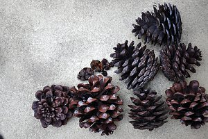 dried pinecones and nuts