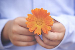 child hands with flower