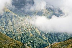 Mountains fir forest