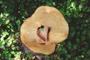Beautiful stump