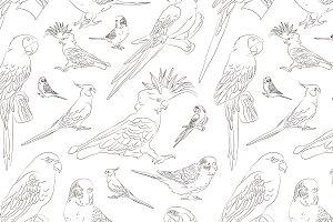 Parrots set pattern