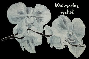Watercolor orchid vector, png, jpeg
