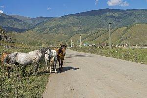 Horses on the roadside.