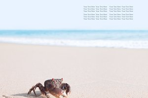 crab on sand banner