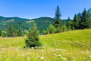 Summer Carpathian mountain