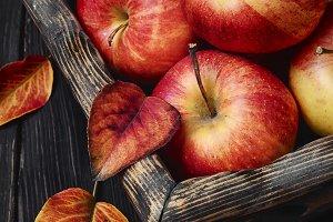 Basket of autumn apples