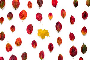 Flat composition of yellow maple leaf contrasts with red autumn leaves ornament isolated on white background. Concept uniqueness, individual, not such as all
