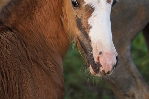 small foal