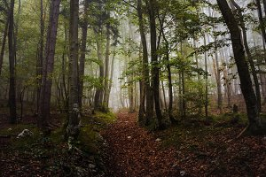 Mystic forest in autumn