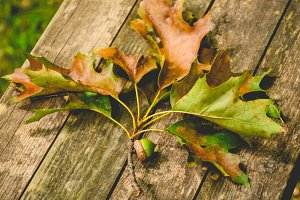 Rustic Wooden Bench with Oak Leaves