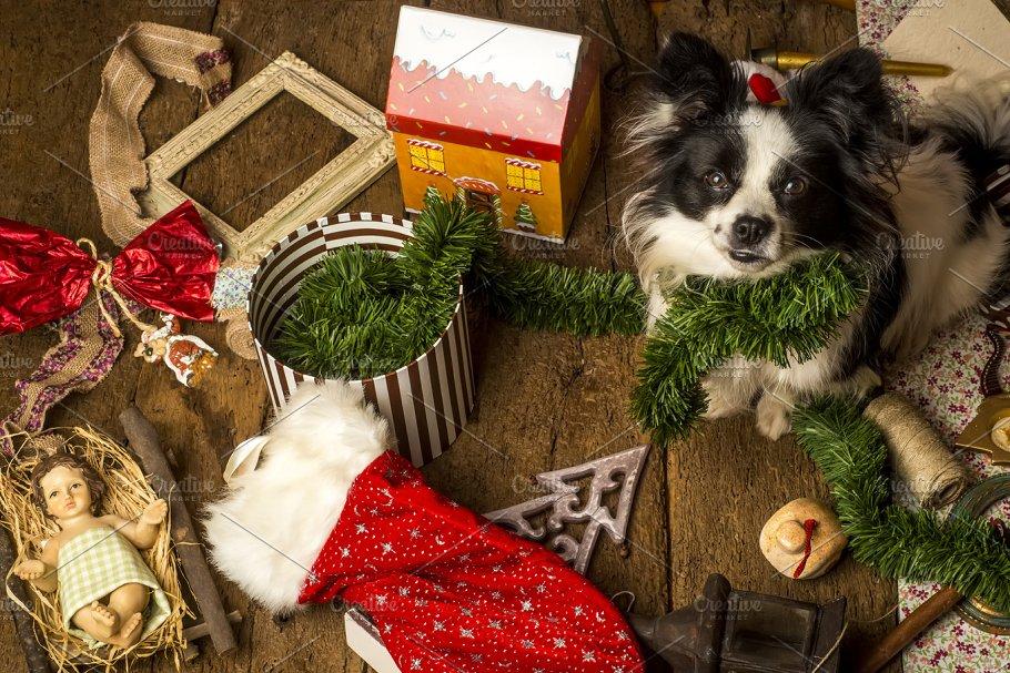 Dog Christmas cards ~ Animal Photos ~ Creative Market