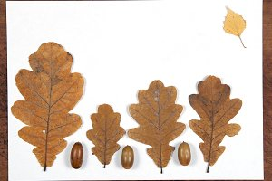 Autumn leaves and acorns frame