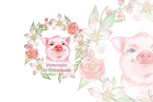Pig and flowers. Watercolor