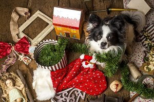 Puppy Christmas cards