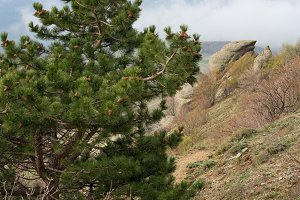 Tree on rocks top, Crimea