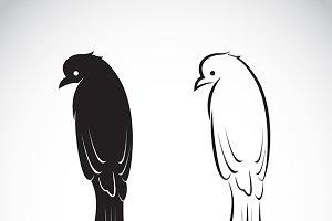 Vector of drongo bird.