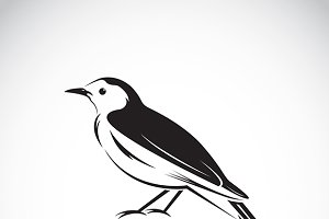 Vector of magpie design .