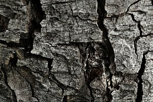 Bark surface