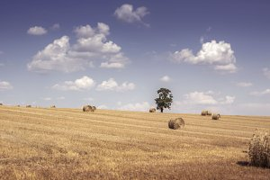French hillside with hay bales