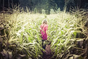 Through the maize