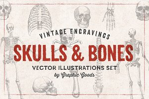 11 Skulls & Bones Illustration Set