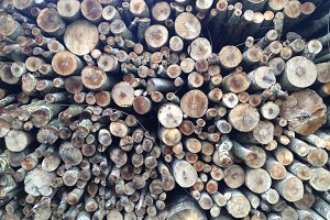 Wet Woodpile