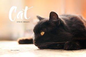 CAT ( images for blog&social media)