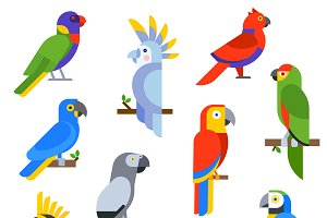 Cartoon parrots set vector