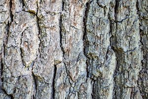 Bark Texture 2.