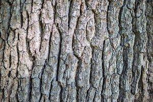 Bark Texture 3.