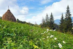 Summer Carpathian mountain panorama