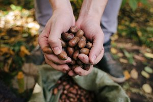 acorns in man's hands