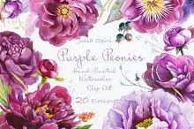 Purple Peonies. Watercolor Clipart